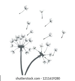 grey silhouette dandelions on white background
