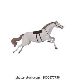 Grey thoroughbred horse, equestrian professional sport vector Illustration