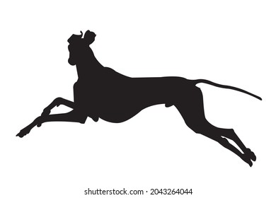 Greyhound dog in shadow form on a white background