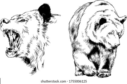 grinning face of a snarling bear painted by hand on a white background sketch logo