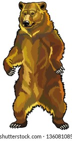 grizzly bear front view picture isolated on white background
