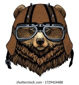 Grizzly bear. Portrait of wild animal. Motorcycle helmet.