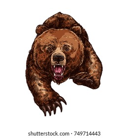 Grizzly bear roaring and attacking wild animal sketch vector icon. Wild forest bear wildlife fauna and zoology symbol for blazon or hunting sport team trophy and nature adventure club