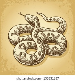 Ground Snake Illustration Vector