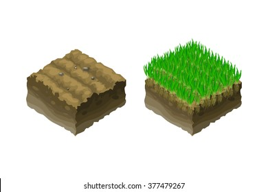 The ground or soil in an isometric sectional view - shows the growth of lawn grass, vector illustration. The improvement of the soil, arrangement of lawns.