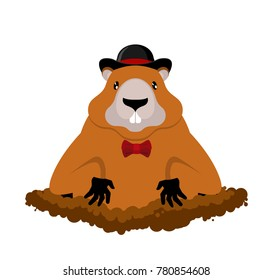 Groundhog Day. Marmot in hat. Rodent aristocrat. Illustration for National holiday