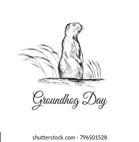 Groundhog Day sketched illustration with hand lettering. February 2 greeting holiday poster or card etc. Groundhog Day vector illustration