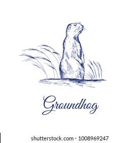 Groundhog. marmot sketch vector illustration. marmot hand drawing