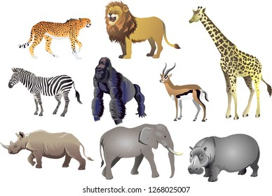 Group Of African Animal Wild Life , Cheetah, Lion, Giraffe, Zebra, Gorilla, Antelope, Rhino, Elephant, Hippopotamus - Vector Illustration