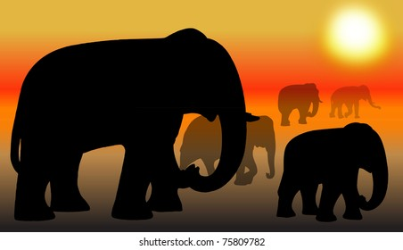 Group of elephant sunset in Thailand