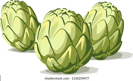 Group of green artichoke vegetable  isolated on white background
