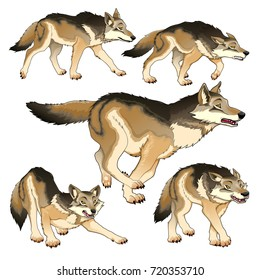 Group of isolated wolves. Vector illustration.