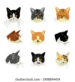 Group of many cats face vector illustration isolated on white background. Cat family. Lovely friendly pets.