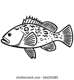 Grouper Fish Illustration