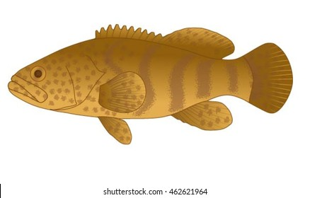 Grouper fish side view