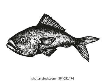 grouper fish sketch vector