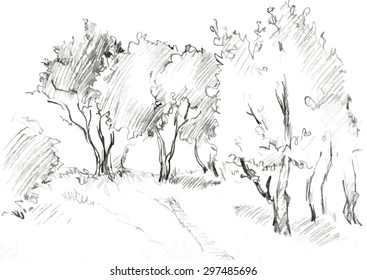 grove of deciduous trees, painted graphite pencil at the white background, hand drawn sketch of landscape, vector illustration