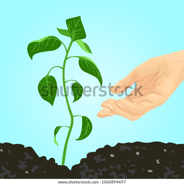Growing green young plant and farmers hand. Care for nature. Fertile land. Vector image of germinating sprout in flat style.