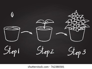 Growing phases of potted plant - seeding, germination, blooming. Life cycle of houseplant drawn with contour lines on chalkboard background. Monochrome vector illustration.