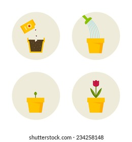 Growing of a plant scheme in symbols.