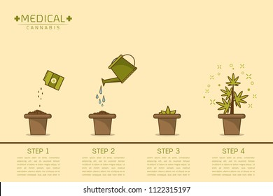 Growing plant stages. Seeds , watering can, sprout and grow cannabis plant. House plant in flower pot. Line style flat vector illustration of house plant with leaves in pot. Thin lines. Grow process.