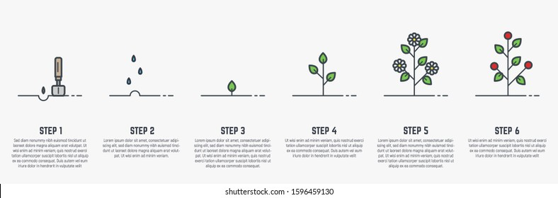 Growing plant stages. Seeds, watering step, sprout and flower, grown plant. House or outdor plant. Line style flat illustration of plant with leaves, flowers and fruit. Thin lines. Grow process.