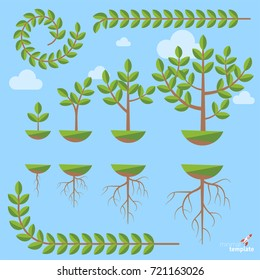 Tree Growth Stages Images, Stock Photos & Vectors   Shutterstock