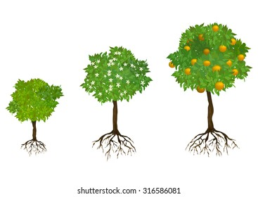 growing trees with roots. vector illustration
