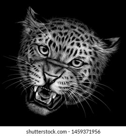 Growling leopard. Black and white  hand-drawn portrait of a growling leopard on a black background.