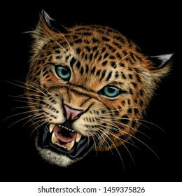 Growling leopard. Color, hand-drawn portrait of a growling leopard on a black background.