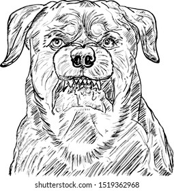 A growling rabid dog hound. Hand drawn vector illustration.