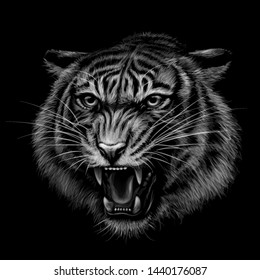 Growling Tiger. Black and white  hand-drawn portrait of a growling tiger on a black background.