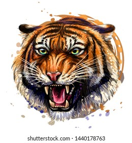Growling Tiger. Color, hand-drawn portrait of a growling tiger on a white background. Watercolor splashes.
