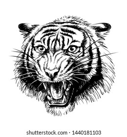 Growling Tiger. Graphic, hand-drawn portrait of a snarling tiger on a white background.