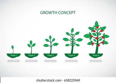 Growth Concept. Plant growth process. 5 stages of Life Cycle. Vector infographic illustration.