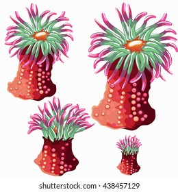 The growth stage colorful marine coelenterates. Vector illustration.
