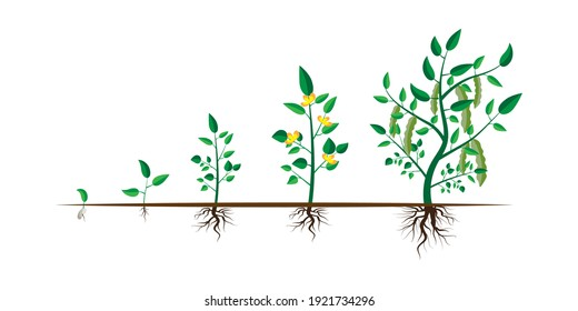 Growth step infographic concept. Cartoon infographic timeline. Plant growth. Stock image.