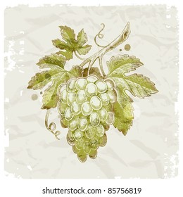 Grunge hand drawn bunch of grapes on vintage paper background - vector illustration