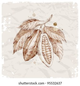 Grunge vector illustration - hand drawn cocoa beans on branch
