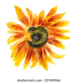 Grunge watercolor image of flower of sunflower on white background. Vector eps8