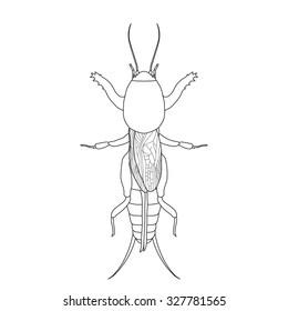 Gryllotalpidae.  European mole cricket. gryllotalpa. Sketch of mole cricket  mole cricket isolated on white background. mole cricket Design for coloring book.  hand-drawn outline mole cricket. Vector