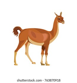 Guanaco standing, side view. Vector illustration isolated on white background.