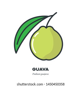 Guava fruit icon, outline with color fill style vector illustration, fruit and leaf