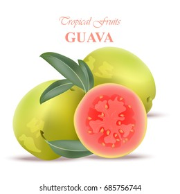 Guava fruit realistic Vector isolated on white background