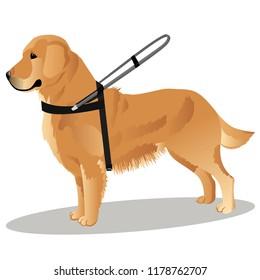guide dog retriever