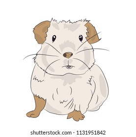 guinea pig, color vector, white background