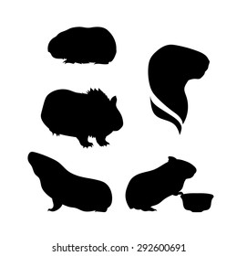 Guinea pig icons and silhouettes. Set of illustrations in different poses.
