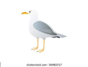 Gull on a white background. Vector illustration seagull