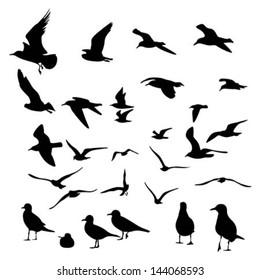 Gull Silhouette