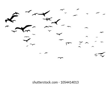 gulls. flocks of birds. silhouettes of seagulls.